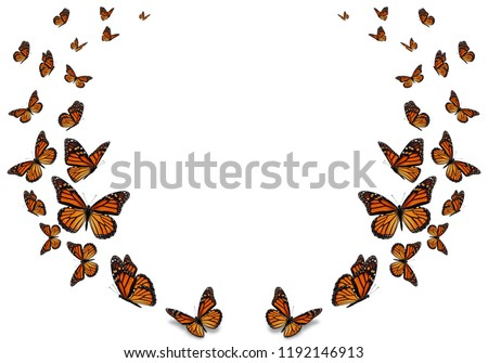 Beautiful monarch butterfly isolated on white background. #1192146913