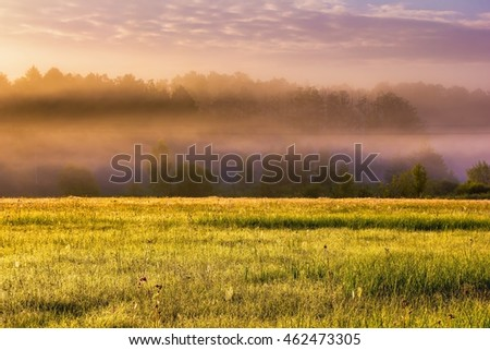 Beautiful morning foggy meadow landscape. Polish countryside at summer. #462473305