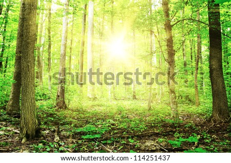 Beautiful morning green forest #114251437