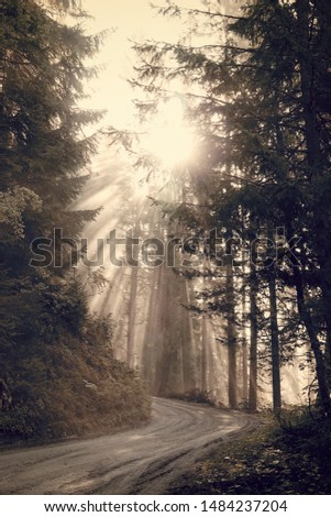 beautiful morning in the forest with sunbeams and fog #1484237204