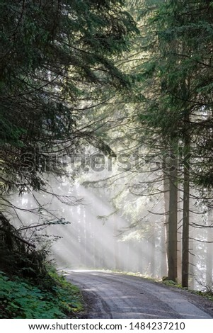 beautiful morning in the forest with sunbeams and fog #1484237210