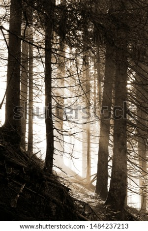 beautiful morning in the forest with sunbeams and fog #1484237213