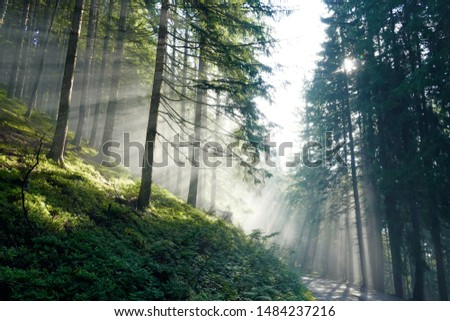 beautiful morning in the forest with sunbeams and fog #1484237216