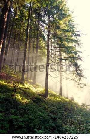 beautiful morning in the forest with sunbeams and fog #1484237225