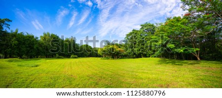 beautiful morning light and blue sky in public park with green grass field.
