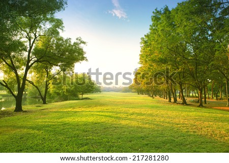 beautiful morning light in public park with green grass field  #217281280