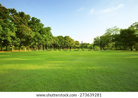 beautiful morning light in public park with green grass field and green fresh tree plant perspective to copy space for multipurpose ストックフォト ©