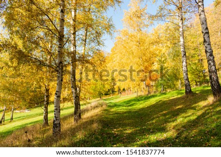 Beautiful morning scene in the forest with sun rays and long shadows #1541837774
