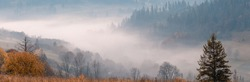 Beautiful morning scenery at autumn mountain valley and a small village in it. Wide panorama landscape of foggy mountain hills with fog in a valley and lonely spruce tree in the foreground.
