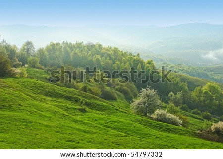 Beautiful morning summer hills with forest and haze