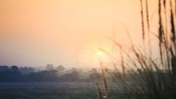 Beautiful morning. Sun is rising behind the wheat field. Sun in focus.
