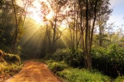Beautiful morning sunburst in the jungle of Andasibe-Mantadia, Madagascar. HDR