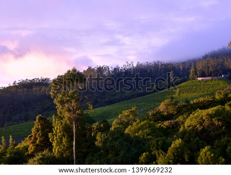Beautiful morning with purple sky, the sunlight falling on lush green tea gardens. The first ray of sun brightens up the whole valley. This pic is taken at Ooty, India.