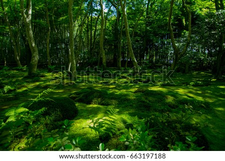 beautiful moss green temple in Kyoto Japan #663197188