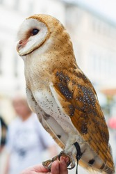Beautiful motley, owl close-up. Tyto alba. Night Hunter. Vertical.