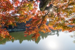 beautiful mount lu autumn landscape, maple leaves are aflame with brilliant autumnal sunshine