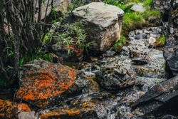 Beautiful mountain creek among rocks. Atmospheric landscape with stones with mosses and lichens in small river. Mossy boulders in cascades of mountain creek. Green plants above water stream in wilds.