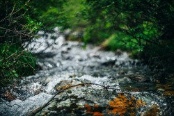 Beautiful mountain creek with rich flora in forest. Big stone with mosses and lichens in shiny water stream of mountain creek on bokeh background. Atmospheric landscape with small river among thickets