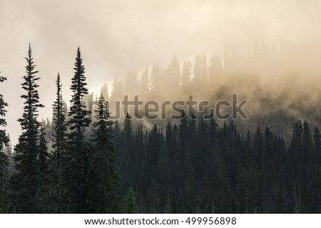 beautiful mountain forests covering with a lot of fog. #499956898