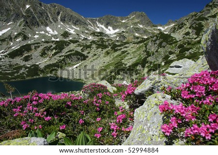 Beautiful mountain landscape. A lake surrounded by rhododendron flowers and snow patches. Wonderfull weather in Retezat National Park, Romania - stock photo