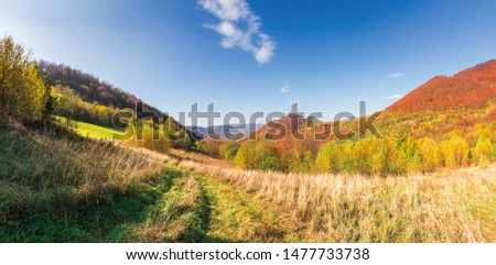 beautiful mountain landscape in autumn. forest on the grassy hills. wonderful sunny weather at high noon. amazing carpathian panoram of uzhanian national park, ukraine