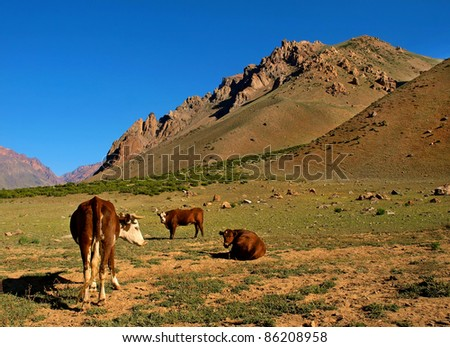 Beautiful mountain landscape in the Andes with cattle eating grass, Argentina, South America