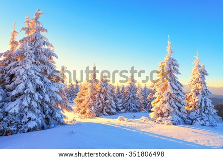 Beautiful mountain landscape opens from the green meadow covered with large and small trees under the snow in the winter New Year's Day. #351806498