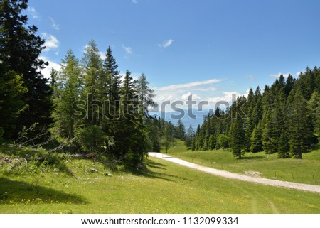 beautiful mountain landscape, pine trees and green summer meadow with blue sky, slovenian alps, Krvavec Slovenia #1132099334