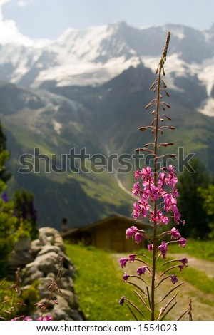 Beautiful mountain scenery, with pink flower in front. [FLOWER IN FOCUS]