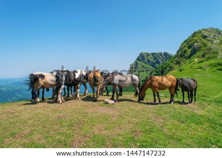Beautiful mountain view from the path from Beklemeto to Kozya Stena, Troyan Balkan, Bulgaria #1447147232