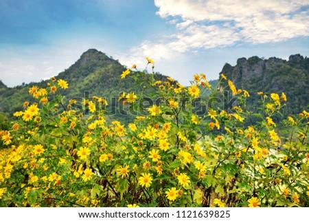 Beautiful mountain with sunflowers #1121639825