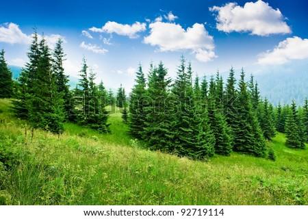 Beautiful mountains landscape in Carpathian #92719114
