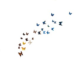 beautiful multi-colored butterflies on a white background, a flock of beautiful butterflies on a white wall.