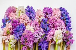 Beautiful Multicolor hyacinth flowers collection. Spring hyacinths blossom. Multicolored blooms Hyacinth Orientalis mixed