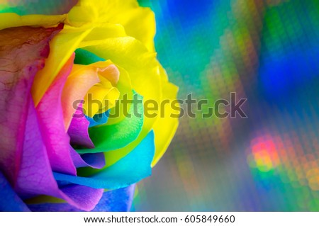 Beautiful multicolor rose with multicolor background #605849660
