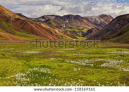Beautiful multicolored rhyolite mountains at Landmannalaugar, complimented by a cotton grass field, Iceland (Island)