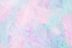 Beautiful multicolour feathers background in pastel pink, blue, mint and purple colors. Minimal abstract composition with copy space for text. Selective focus, festive concept