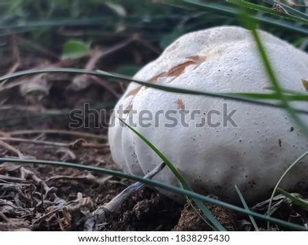 Beautiful mushroom from m Puerto Rico's Soil Foto stock ©