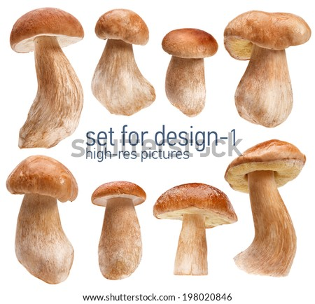 Beautiful mushrooms - gustable edulis isolated on white background with set for design  Foto stock ©