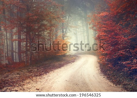 Beautiful mysterious red and orange color season forest with road. Color filter effect used.