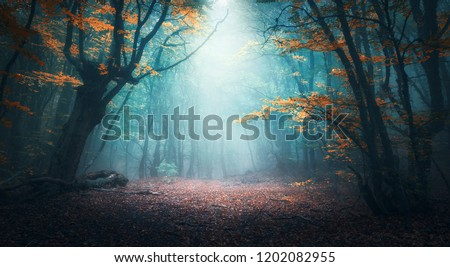 Beautiful mystical forest in blue fog in autumn. Colorful landscape with enchanted trees with orange and red leaves. Scenery with path in dreamy foggy forest. Fall colors in october. Nature background #1202082955