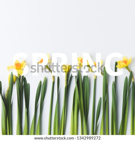 beautiful narcissus and paper cut lettering