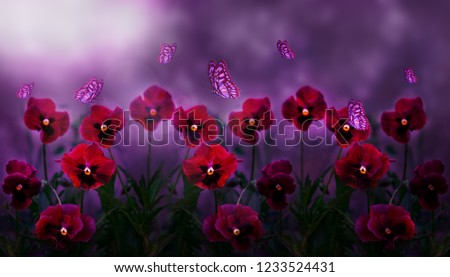 Beautiful natural background. Flowers violets in the moonlight and flying butterflies.
