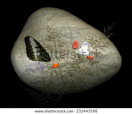 Beautiful natural composition made from big stone, wings of tropical butterflies and flower petals. The composition made on a tropical island.