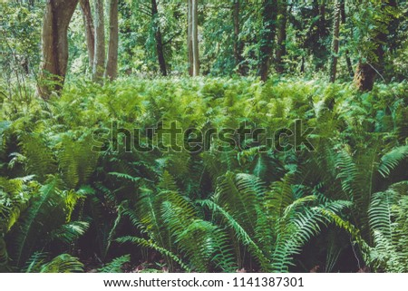 Beautiful natural green background with fern leaves. #1141387301