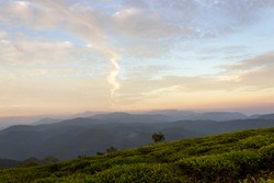 Beautiful Natural Landscape From A Tea Plantation At Sunset
