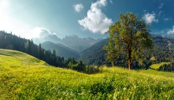 Beautiful natural landscape in the summer time. View on majestic mountains, grassy hills with fresh green grass and alone tree under sunlit. Rural perfect scene of nature. sunny morning of countryside