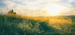 Beautiful natural panoramic countryside landscape. Blooming wild high grass in nature at sunset warm summer. Pastoral scenery. Selective focusing on foreground.