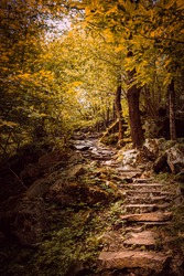 Beautiful natural stone stairs in the forest with orange and yellow tones typical of autumn.