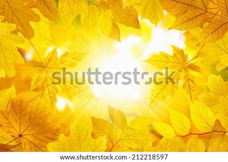 Beautiful nature autumn background - yellow leaves, bright sun, season fall